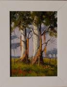 Willie Strydom: Trees